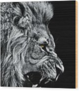 Close-up Of Lion Roaring Against Black Wood Print
