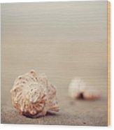 Close Up Of Shells On Beach Wood Print