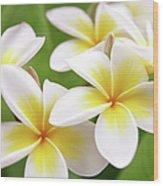 Close Up Of White And Yellow Plumeria Wood Print