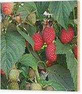 Close-up Ripening Organic Raspberries Wood Print
