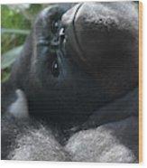 Close-up Shot Of Silverback Gorilla Making An Angry Face Wood Print