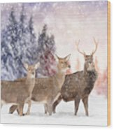 Close Young Deer In Nature. Winter Time Wood Print