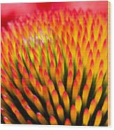 Closeup Of Flower Echinacea Purpurea Wood Print