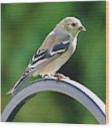 Closeup Of Goldfinch Wood Print