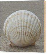 Cockle Shell 2015c Wood Print