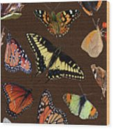 Collage Of Ca Butterflies Wood Print