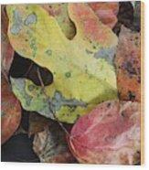 Collective Autumn Color Wood Print