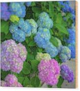 Colorful Hydrangeas Wood Print