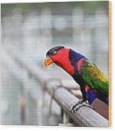 Colorful Lory Wood Print