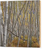 Colorful Stick Forest Wood Print