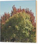 Colors Of The Neighborhood 25 Wood Print