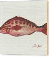 Comber Fish Wood Print