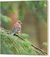 Common Chaffinch Fringilla Coelebs Wood Print