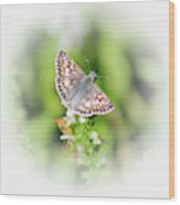 Common Checkered Skipper Butterfly  Wood Print