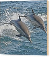 Common Dolphins Leaping Wood Print