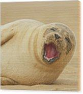 Common Seal Wood Print