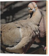 Cooing Mourning Doves 1 Wood Print