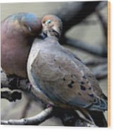 Cooing Mourning Doves 2 Wood Print