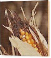 Corn In Dry Husk Wood Print