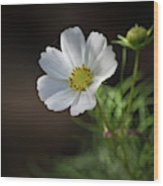 Cosmos In The Cottage Garden Wood Print