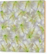 Cotton Seed Lilies Wood Print