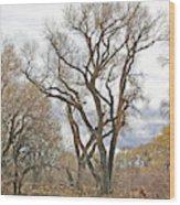 Cottonwood Az Bayou Leafless Tree Sky Clouds Path 31262019  Wood Print