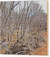 Cottonwood Az Bayou Leafless Trees Scrub Water Sand Clouds 3262019_5320 Wood Print