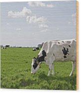 Cow Eating Grass On Farm Land Wood Print