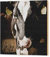 Cow Inside The Farm Wood Print