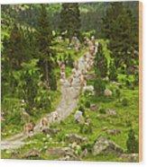Cows Walking In Catalan Pyrenees Wood Print