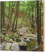 Creek In Massachusetts 2 Wood Print