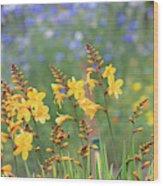 Crocosmia Buttercup Flowers Wood Print