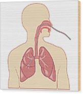 Cross Section Biomedical Illustration Wood Print