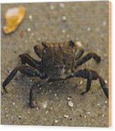 Curious Crab Wood Print