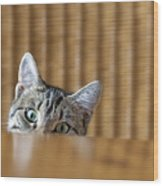 Curious Young Kitten Looking Over A Wood Print