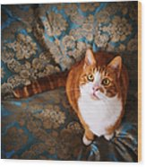 Cute Cat Named Nisse Wood Print