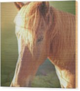 Cute Chestnut Pony Wood Print