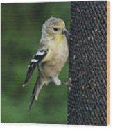 Cute Goldfinch At Feeder Wood Print