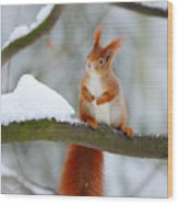 Cute Red Squirrel In Winter Scene With Wood Print