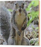 Cute Squirrel Wood Print