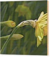 Daffodil In Sun Wood Print