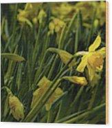 Daffodil Starlight Wood Print