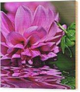 Dahlia On Water Wood Print