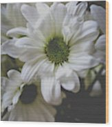 Daisey Flowers 0981 Wood Print