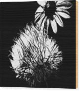 Daisy And Thistle Black And White Wood Print
