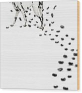 Dalmation Losing Spots Wood Print