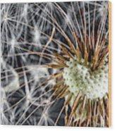 Dandelion Seed Pod Wood Print