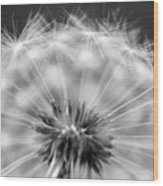Dandelion Seeds Pod Macro Wood Print