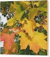 Days Of Autumn 24 Wood Print