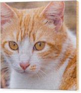 Deadly cat-stare Photograph by Vanessa Macias Vanessa Macias Baby